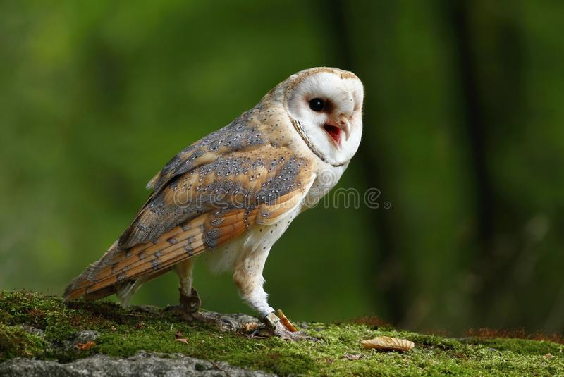 trevlig owl royaltyfri foto