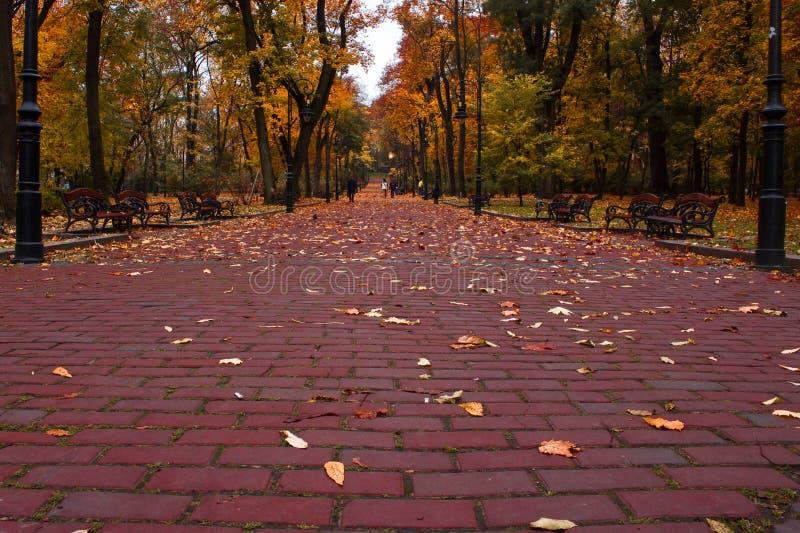Trevlig Park Arkivbild