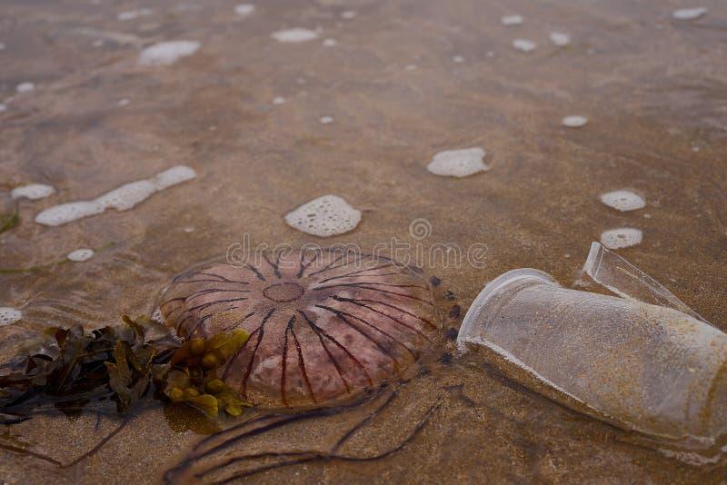 Trevlig sandig strand i ett verkligt område av Irland som får som förorenas av människor och plast- avfalls Också finns det någon royaltyfri foto
