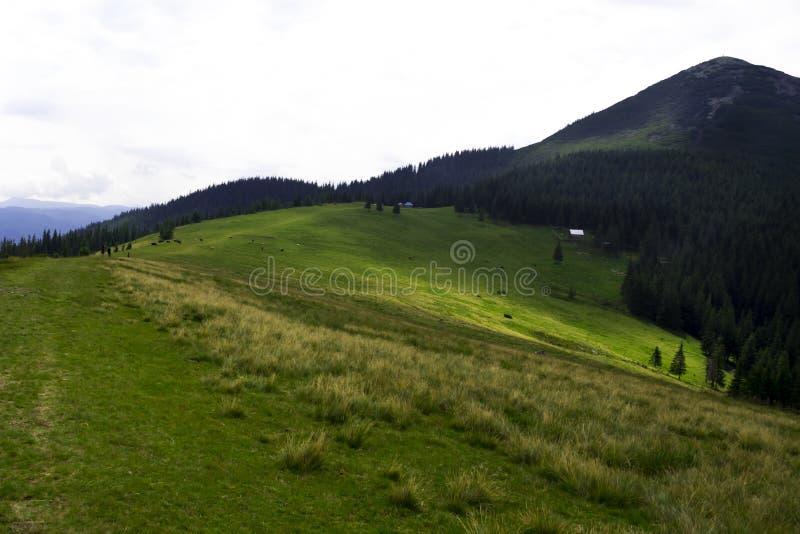 Trevlig sikt av bergen lopp Turism ukraine carpathians royaltyfri foto