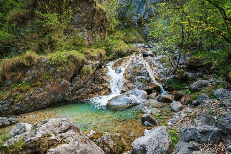Trevlig sikt av den Vertova floden royaltyfri bild