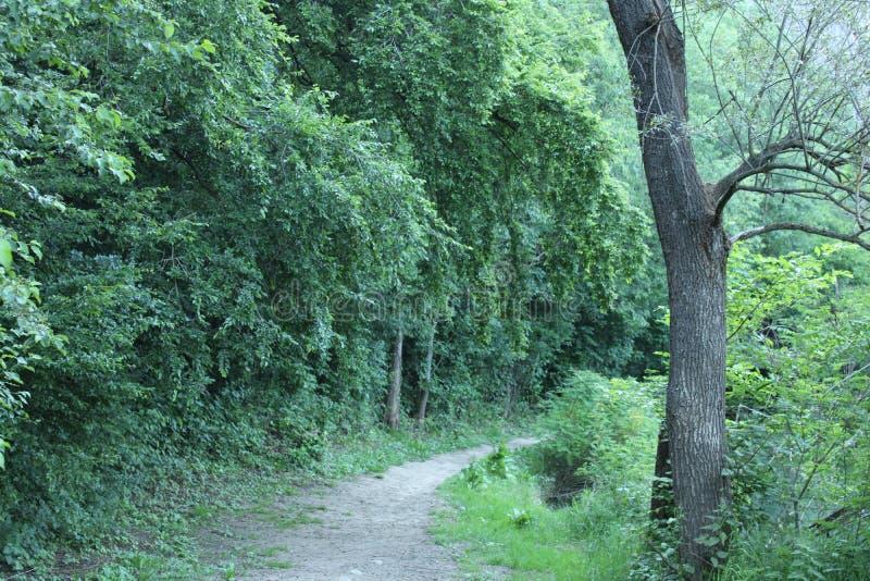 Trevlig sikt av en skogväg arkivfoton