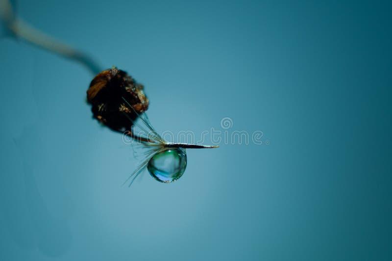Trevlig vattendroppe kärnar ur under av den lösa blomman arkivbild