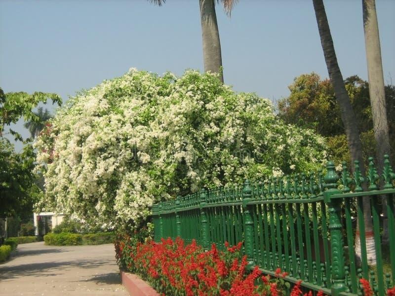 trevlig vit blomma arkivfoton