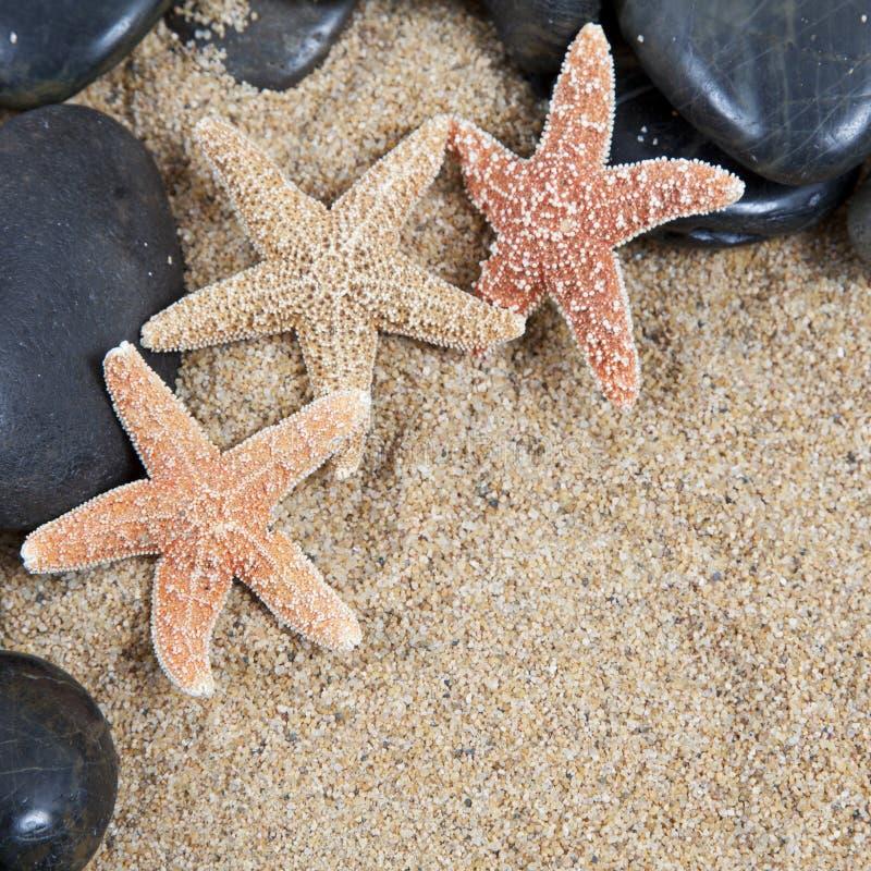 trevliga sandiga havsskal för strand arkivbild