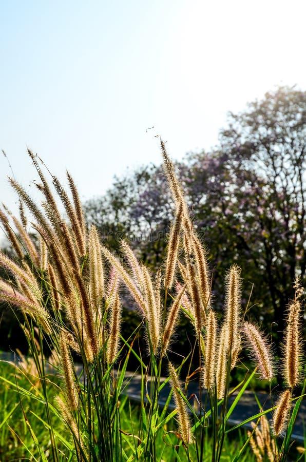 Trevligt blommagräs med tillbaka ljus arkivbild