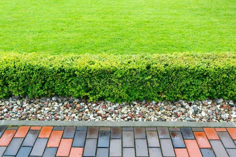 Trevligt klippt låg buske på bakgrunden av en grön gräsmatta royaltyfri foto