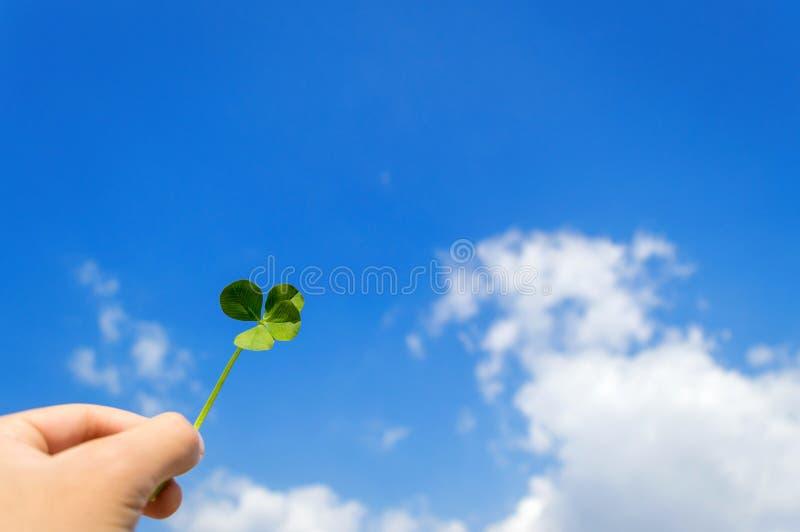 Trevo afortunado de quatro folhas fotografia de stock