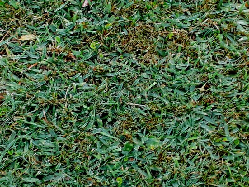 Trextura de verde de pasto de Fondo/fond de texture herbe verte image libre de droits