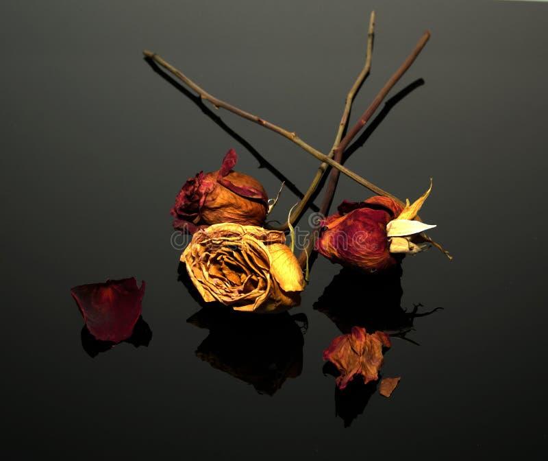 Trhee trocknete Rosen auf einem reflektierenden schwarzen Blatt stockfoto