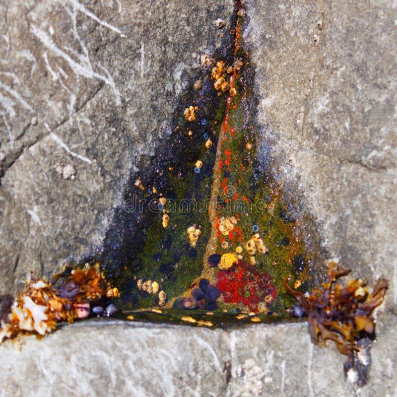 Triángulo como piscina de la marea fotografía de archivo