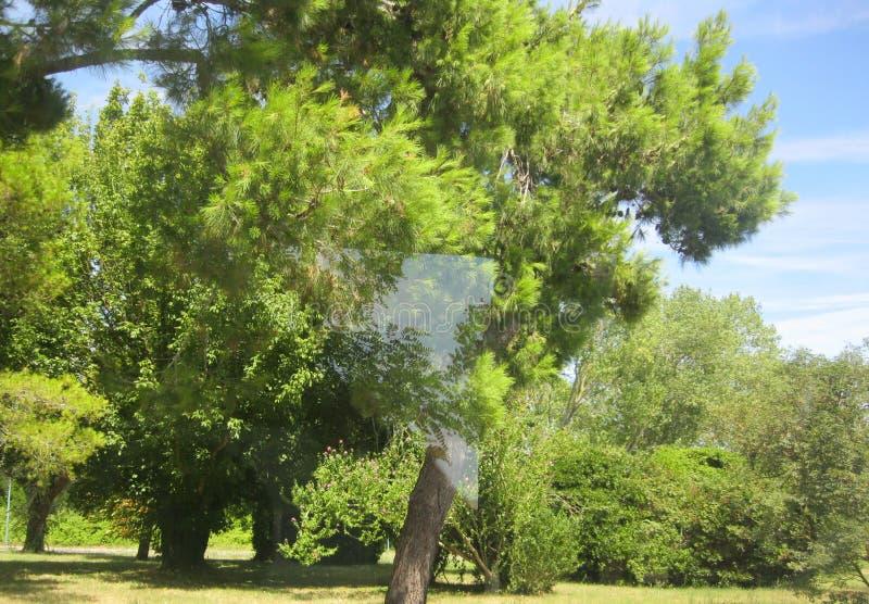 Triangel i mitt av trädet royaltyfri bild