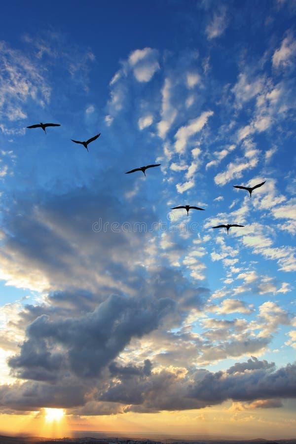 Triangelflocken av flyttfåglar arkivbilder