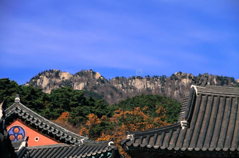 Triangle temple roof with dragon head and back is a green forest stock image