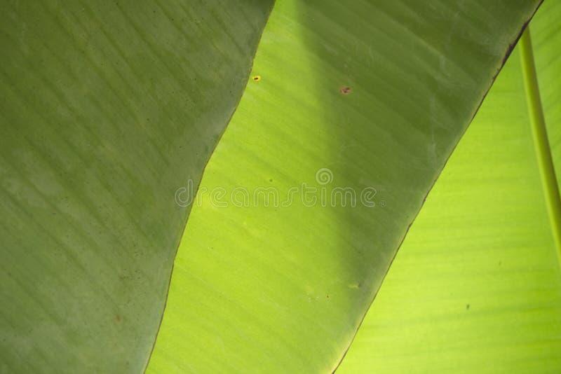 Triangle three abstract banana leaves royalty free stock photos