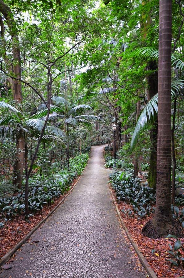 Trianon park na Paulista alei, Sao Paulo, Brazylia obraz royalty free