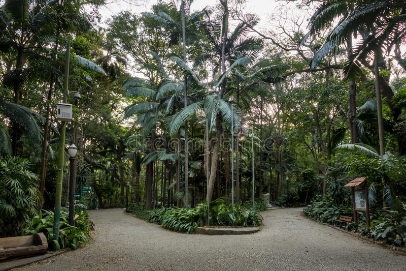 Trianon Park at Paulista Avenue - Sao Paulo, Brazil. Trianon Park at Paulista Avenue in Sao Paulo, Brazil stock image