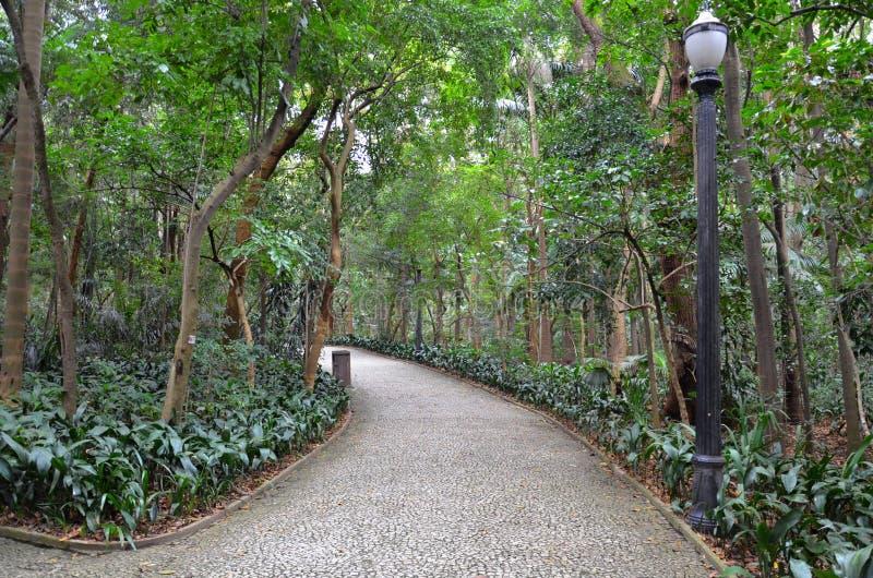 Trianon parkerar på den Paulista avenyn, Sao Paulo, Brasilien royaltyfria bilder