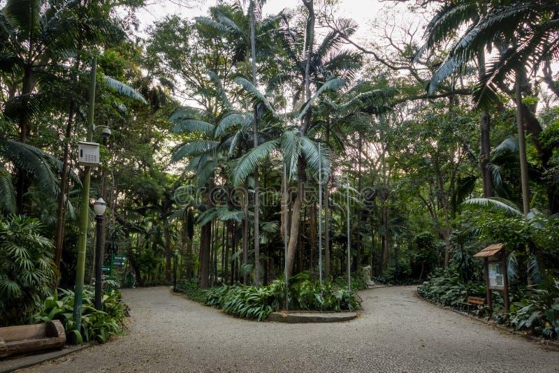 Trianonpark bij Paulista-Weg - Sao Paulo, Brazilië stock afbeelding