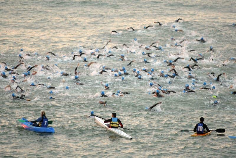 Triathletes sur l'événement de natation image libre de droits