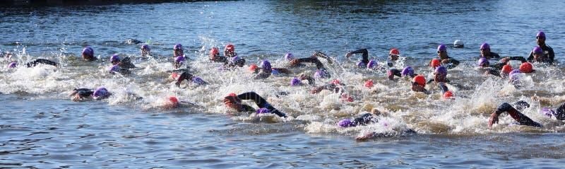 Triatlonzwemmers in de rivier Ouse bij St Neots stock foto
