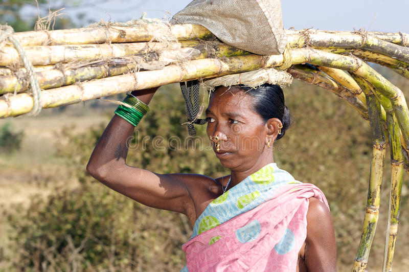 Tribal woman carryng sugar cane. The antiquity of Orissa is endorsed by her ancient people who continue to inhabit their traditional dwelling places in remote stock photo
