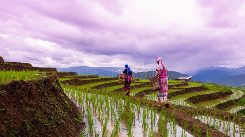 Tribus de colline marchant sur la terrasse de riz à la PA Bong Peang de Baan photos stock
