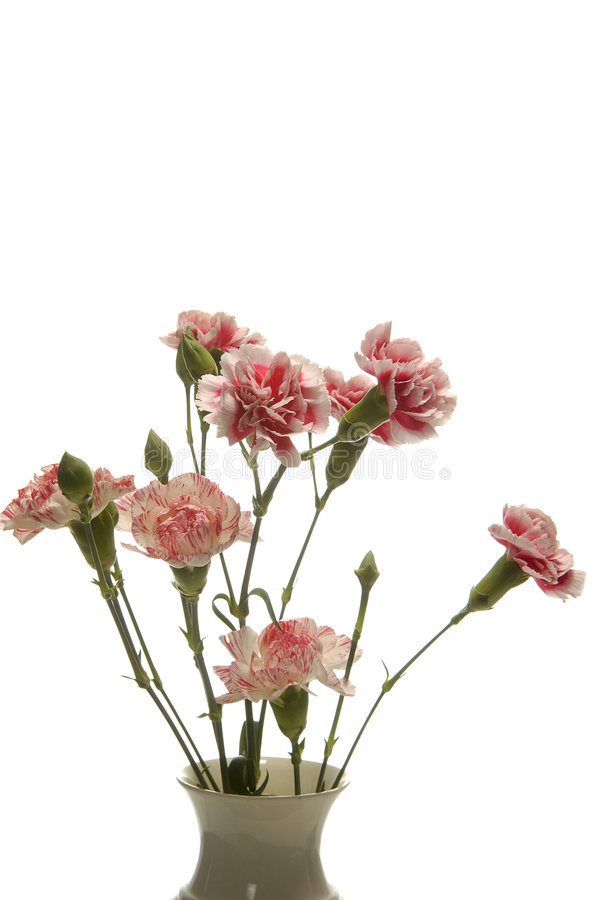 Tribute Of Carnations Royalty Free Stock Photography