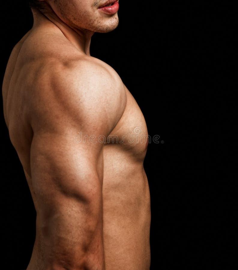 Triceps e ombro do homem com corpo muscular do ajuste foto de stock royalty free