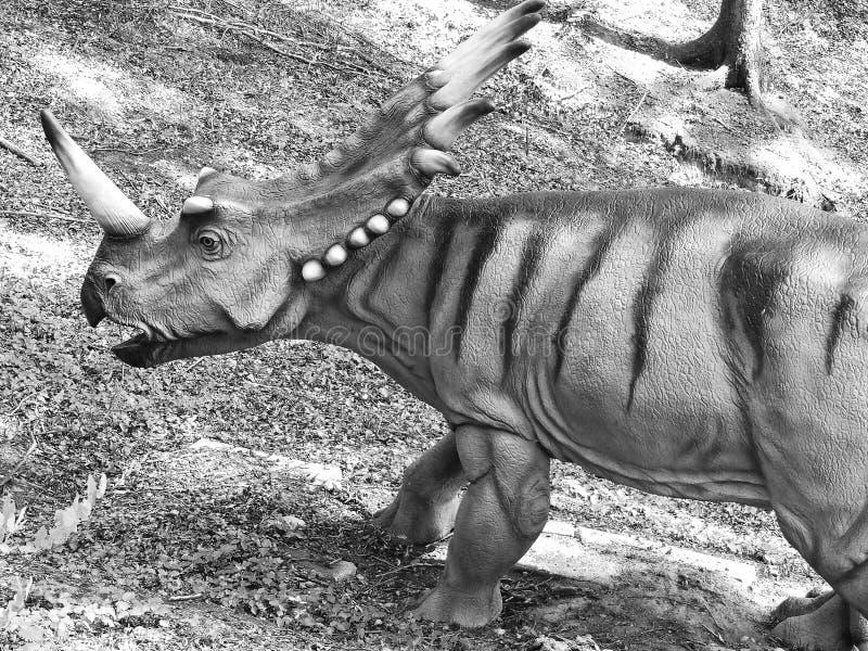triceratops Δεινόσαυρος στα ξύλα στοκ φωτογραφία με δικαίωμα ελεύθερης χρήσης
