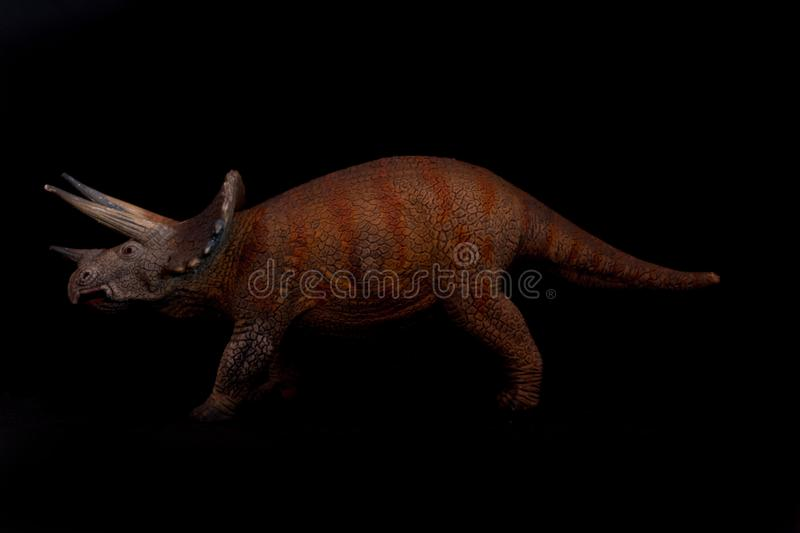 Triceratops on black background. Triceratops isolated on black background. Triceratops is an herbivore dinosaur lived in cretaceous period stock photography
