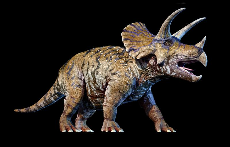 Triceratops 3d rendering On black background. Perspective view stock illustration