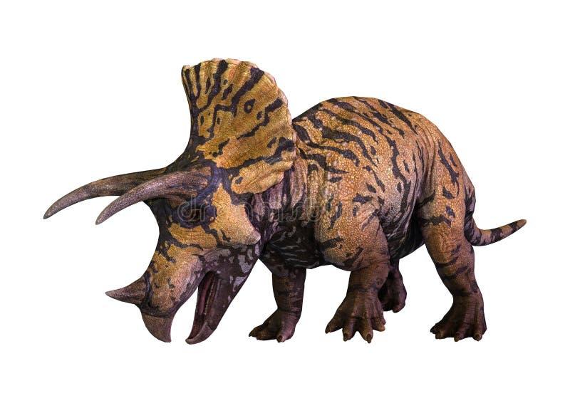 Triceratops del dinosaurio de la representación 3D en blanco libre illustration