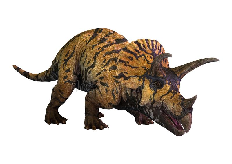 Triceratops del dinosaurio de la representación 3D en blanco stock de ilustración
