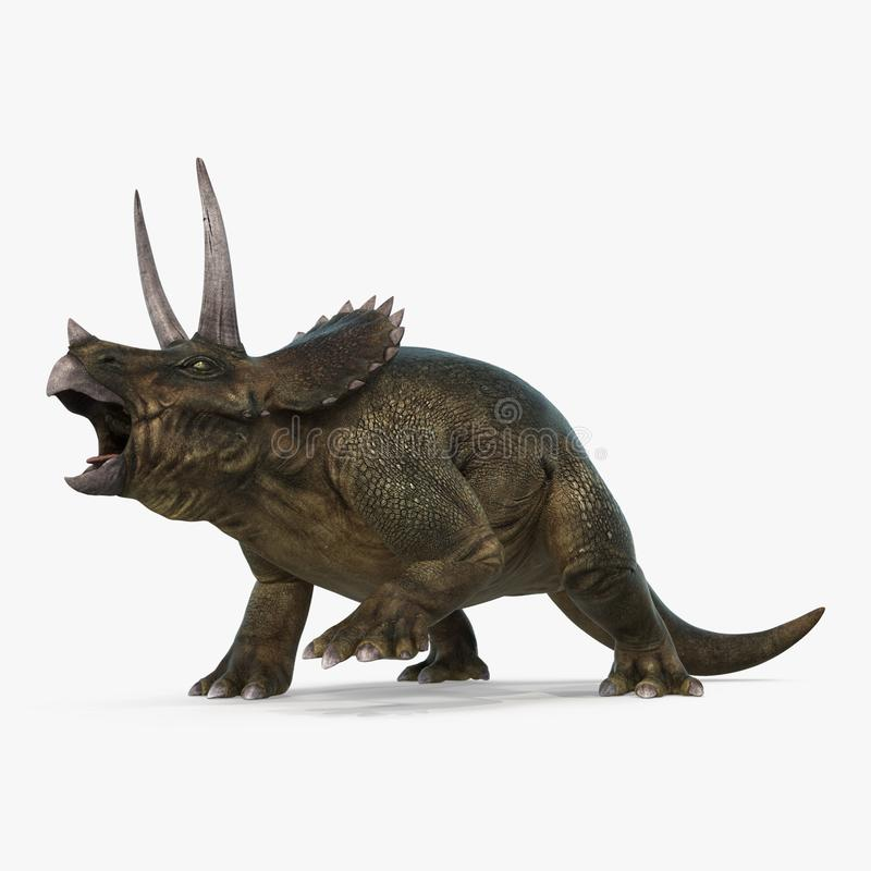 Triceratops dinosaur on bright background. 3D illustration. Triceratops dinosaur on white background. 3D illustration royalty free stock images