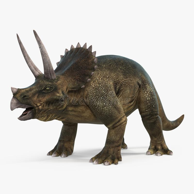 Triceratops dinosaur on bright background. 3D illustration. Triceratops dinosaur on white background. 3D illustration stock photography