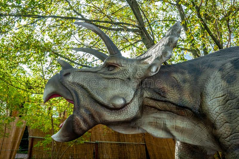 Triceratops dinosaur head with open mouth closeup royalty free stock photos
