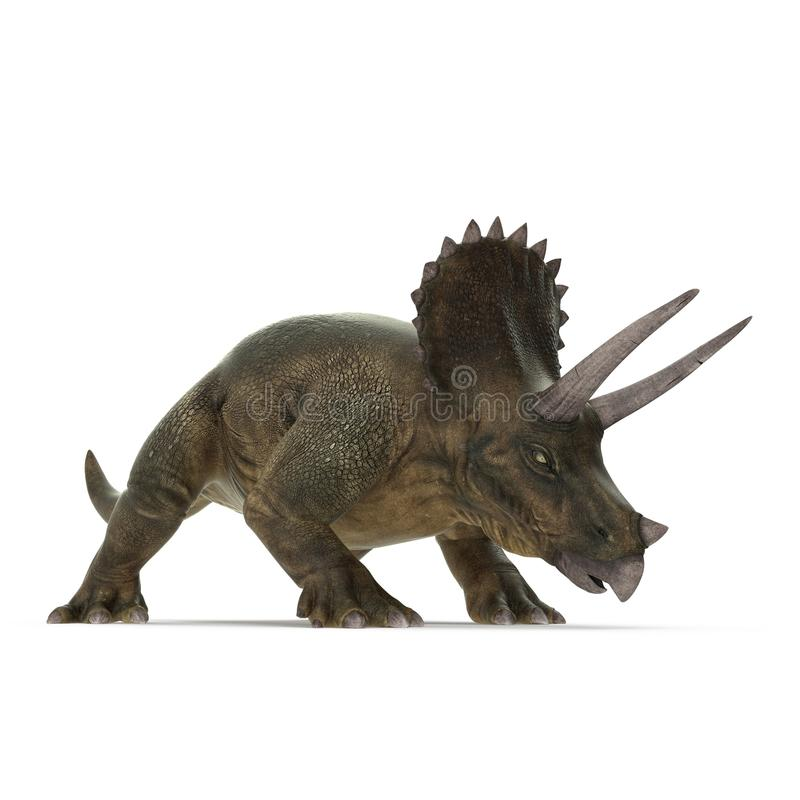 Triceratops dinosaur on white. 3D illustration stock illustration