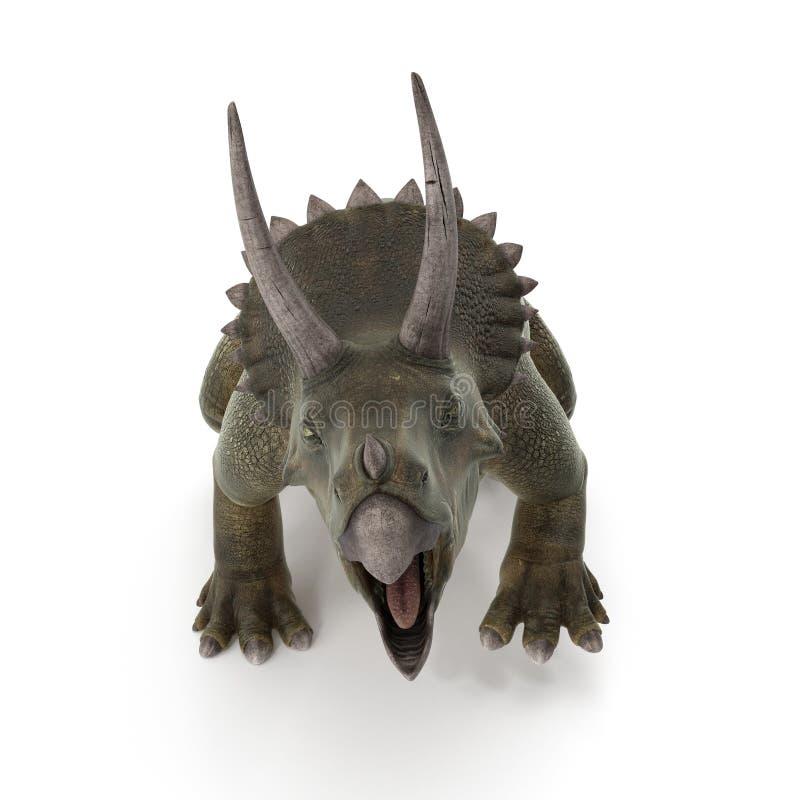 Triceratops dinosaur on white. 3D illustration. Triceratops dinosaur on white background. 3D illustration royalty free illustration