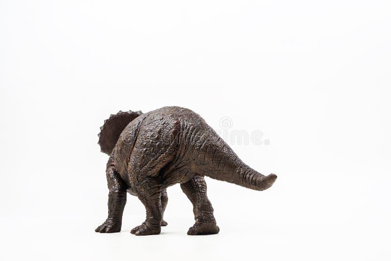 Triceratops dinosaurie på vit bakgrund arkivbilder