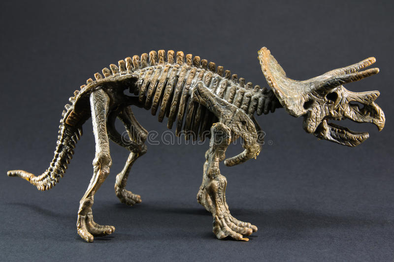 Triceratops fossil dinosaur skeleton model toy. On black background royalty free stock photography