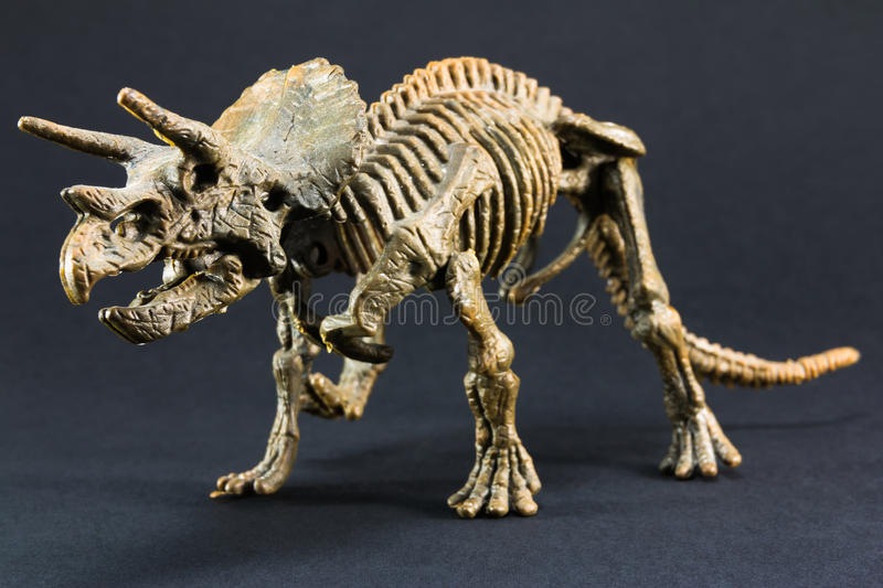 Triceratops fossil dinosaur skeleton model toy. On black background royalty free stock photo