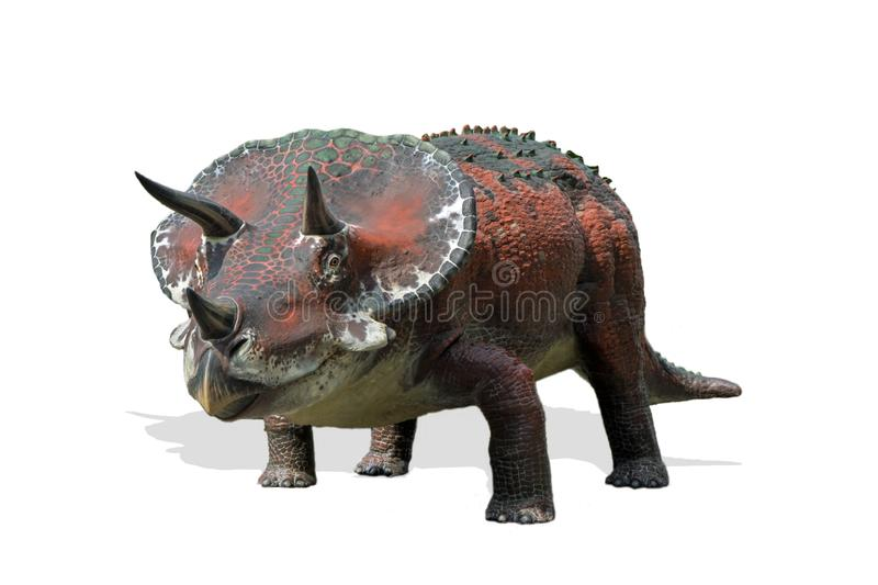 Triceratops isolated on white background. Portrait of triceratops isolated on white background.Triceratops is an herbivore dinosaur lived in cretaceous period royalty free stock images
