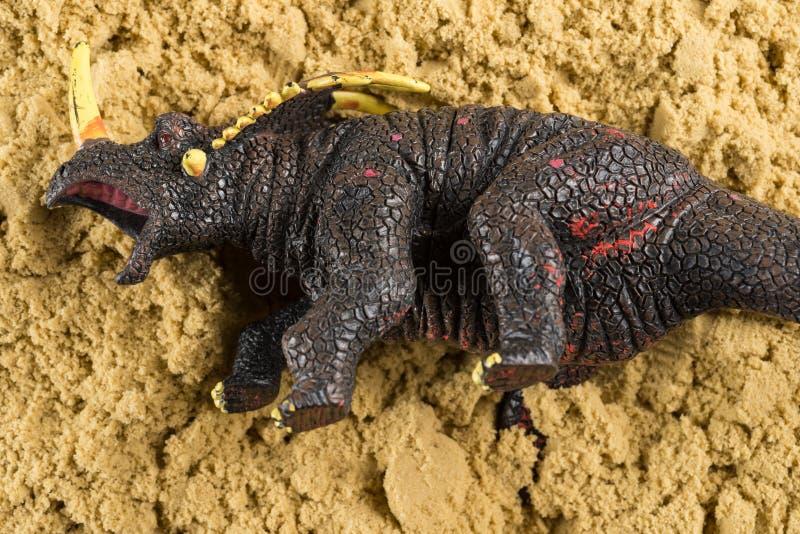 Triceratops på sandbegrepp av djurt gräva arkivbild