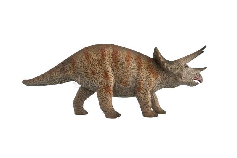 Triceratops på vit bakgrund arkivfoton