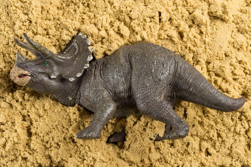 Triceratops on sand. Concept of historical animal excavating royalty free stock images