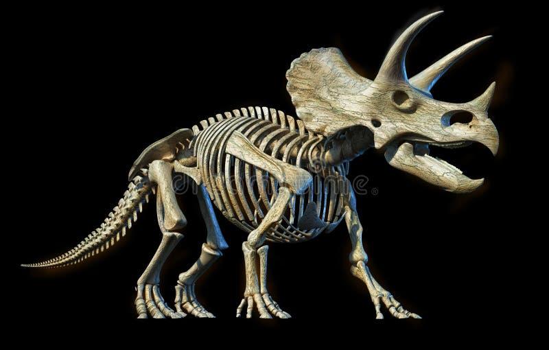 Triceratops skeleton 3d rendering on black background. Triceratops skeleton 3d rendering perspective view on black background royalty free illustration