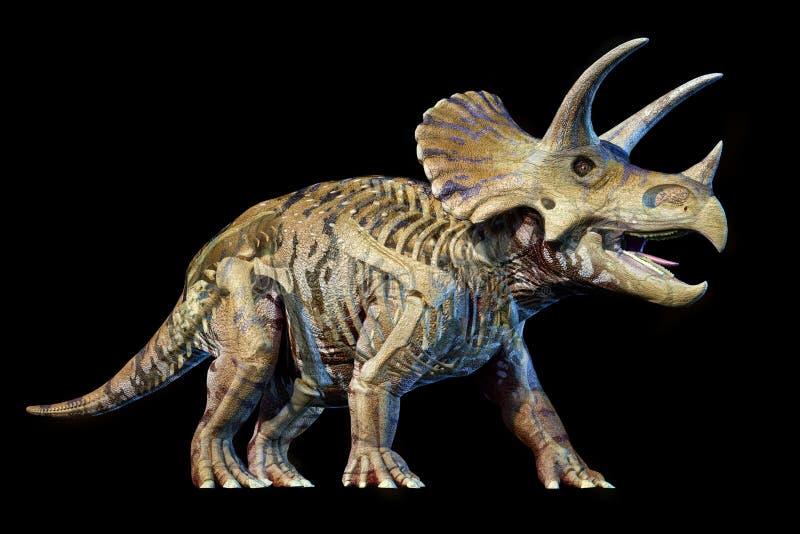 Triceratops with skeleton 3d rendering on black background. Triceratops with skeleton in ghost effect 3d rendering on black background royalty free illustration