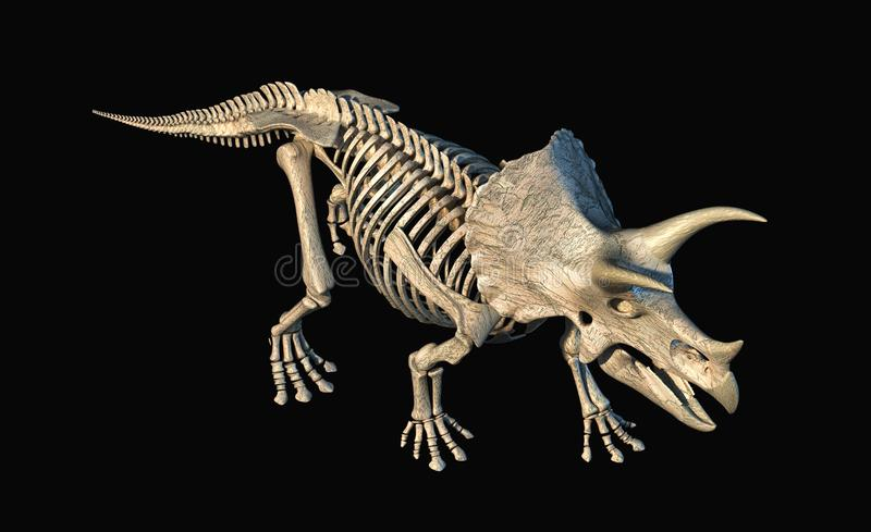 Triceratops skeleton 3d rendering on black background. Triceratops skeleton 3d rendering perspective view from above on black background stock illustration