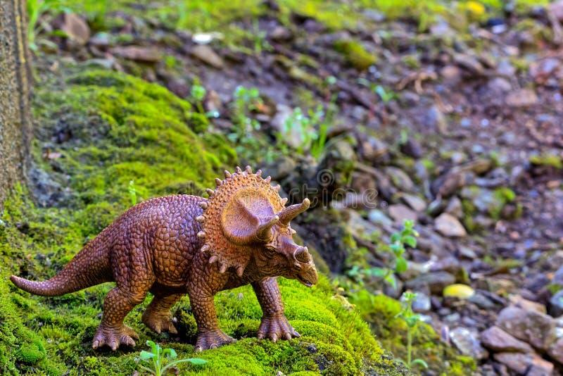 Triceratops som går på gammal mossa med den lilla busken arkivbilder